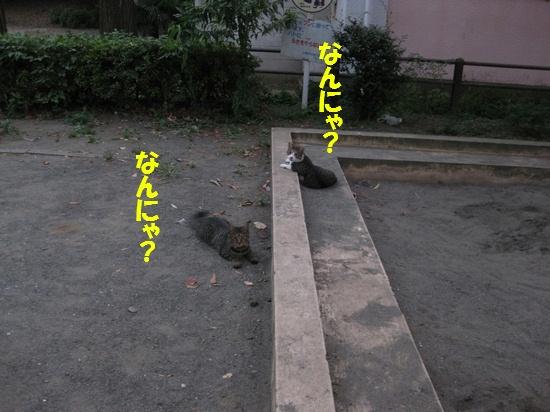 20090828_01.jpg