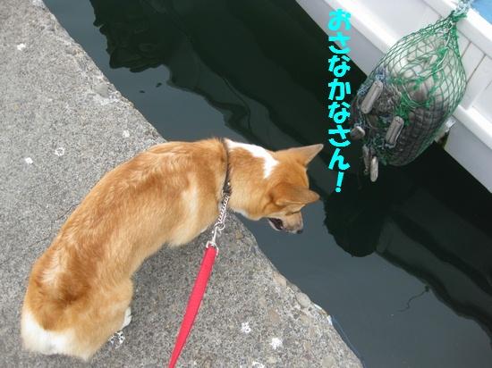 20090903_09.jpg