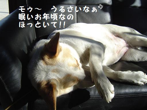001otosigoro.jpg