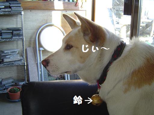003suzuimu.jpg