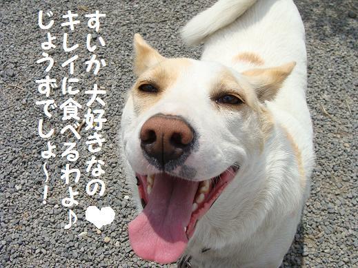 004suiasuki.jpg