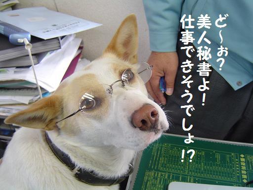 006bijinnhisyo.jpg