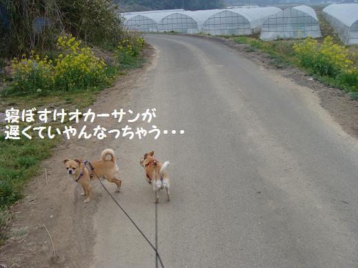 006nebosuke.jpg