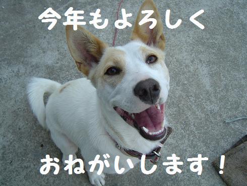 008kotoyoro.jpg