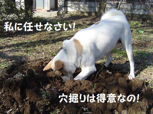 023tokuinano.jpg