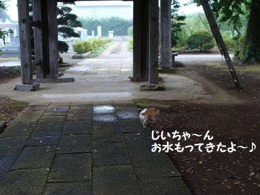 024mottekitayo.jpg