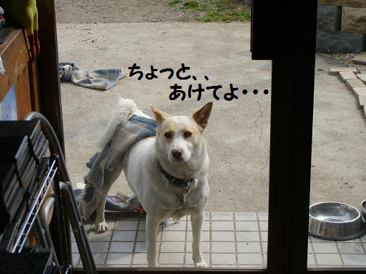 037aketeyo.jpg