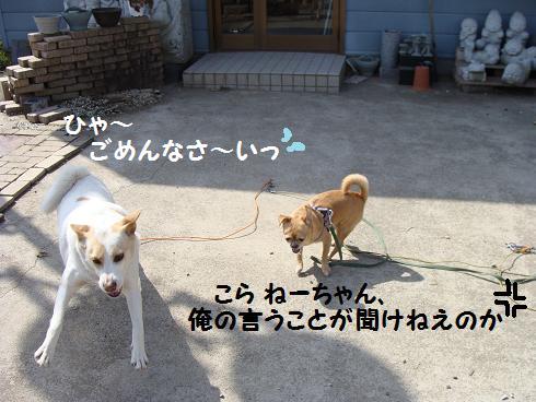 DSC00048gokudou.jpg