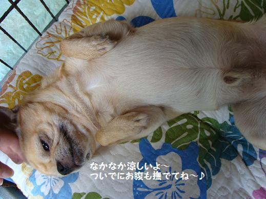 DSC02179nakanaka.jpg