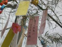 七夕祭り 短冊5.jpg