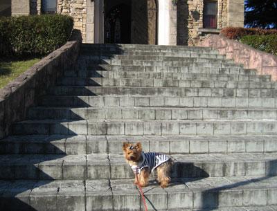 聖アンナ教会の階段での空