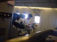 【画像】熊猫乘飛機