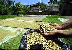 ペルー・コーヒー