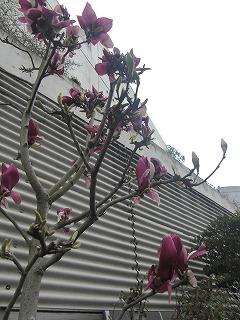 病院近くのお花たち4