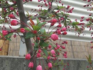 病院近くのお花たち