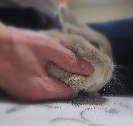手と手~♪③