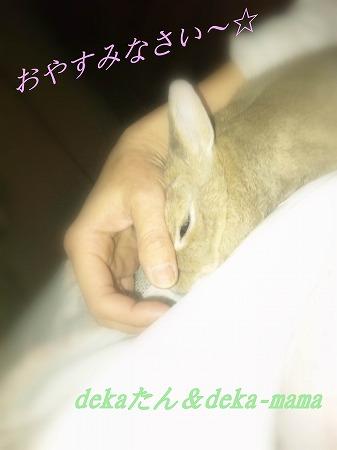 おやすみなさい~☆