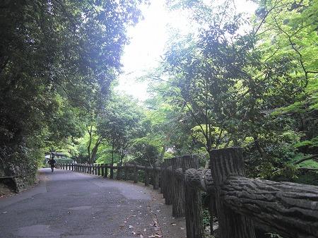 静かな滝道
