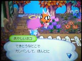 オレンジのコスモスが咲いた。ピンクが欲しい。