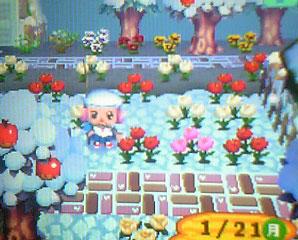 咲いた 咲いた チューリップの花が♪