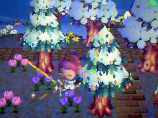 針葉樹のイルミ
