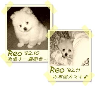 reo-02.jpg
