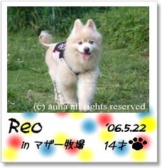 reo-03.jpg
