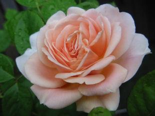 5月11日の花