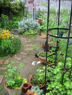 5月2日の庭