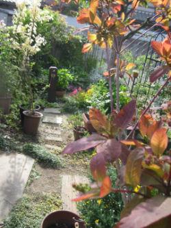 きょうのお庭