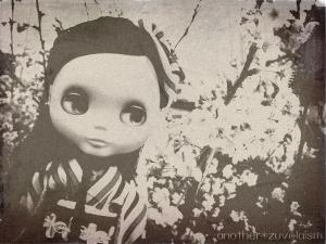 sakura_bly.jpg