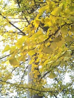 yellowleaves.jpg