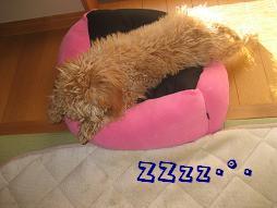 おやすみー^^