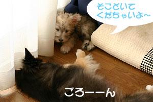 aohaku1013-3