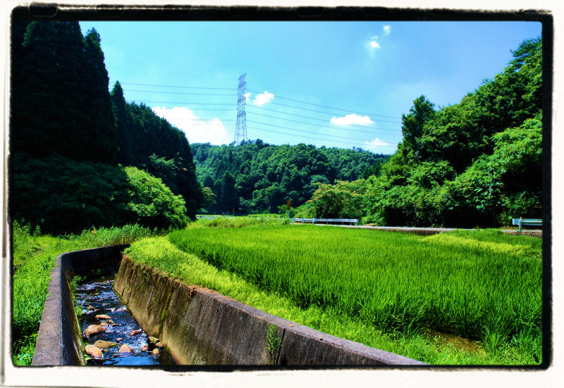 20100722_51a.jpg