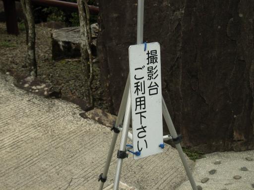 Bridge-Aya4.jpg