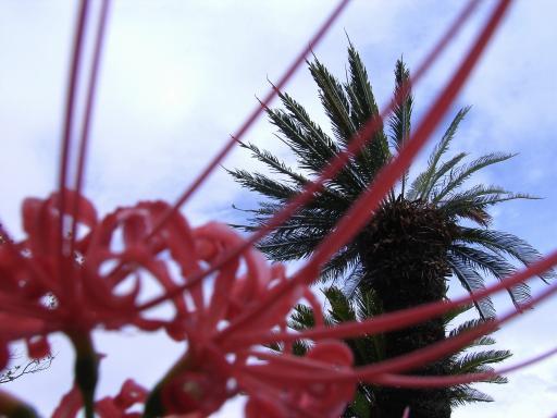 FloralColors18.jpg