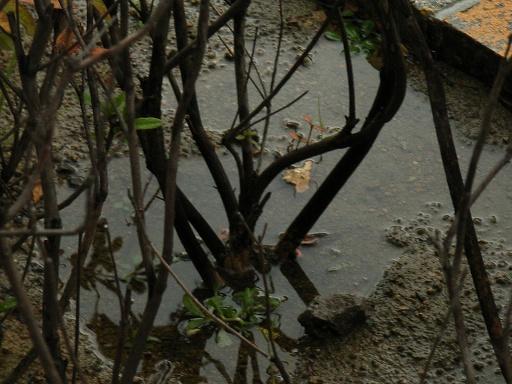 RainyTime51.jpg
