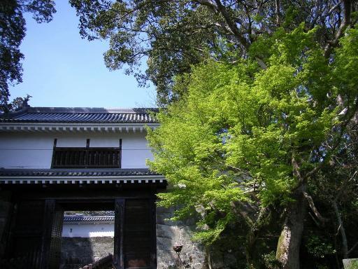 Wakaba2-l.jpg
