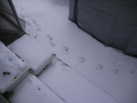 猫 足跡3