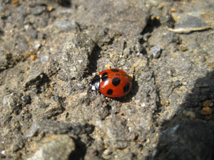ladybug100319.jpg