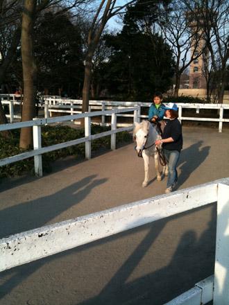 pony100201.jpg