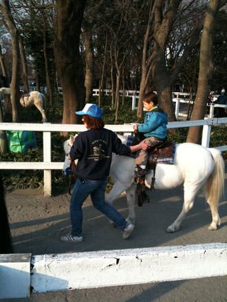 pony2100201.jpg