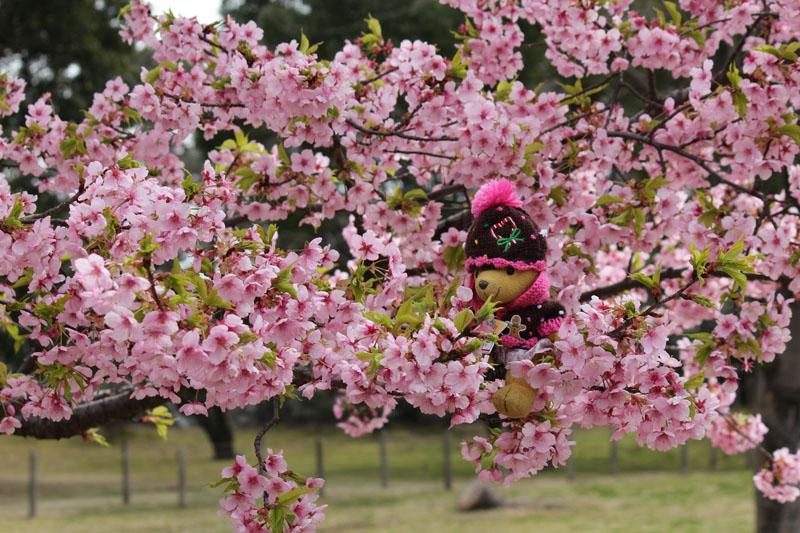 伊東小室桜に 120308