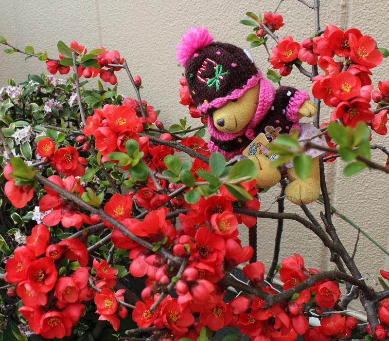 木瓜の花と 120328