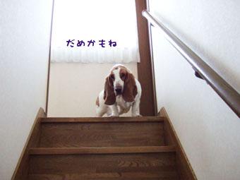 2007_01190001**.jpg