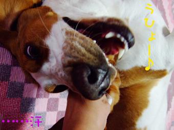 2007_01290008.jpg
