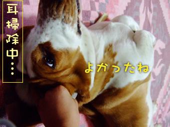2007_01290009*.jpg