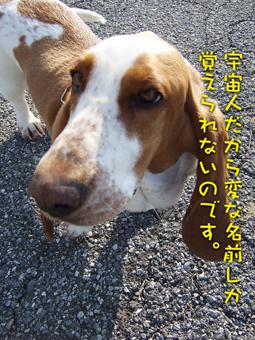 2007_01290015.jpg