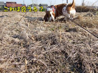 2007_02200018.jpg